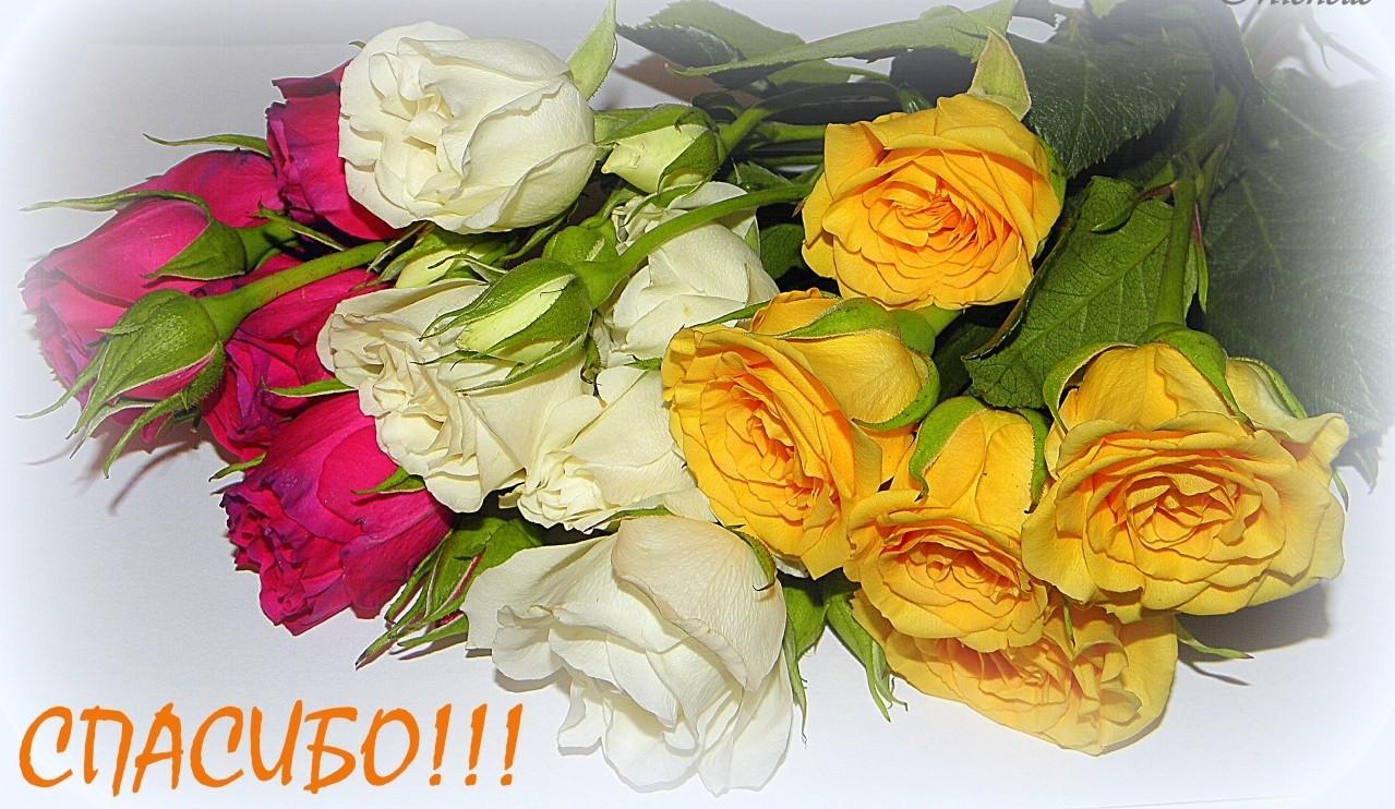 Открытка днем, открытки красивые букеты цветов спасибо