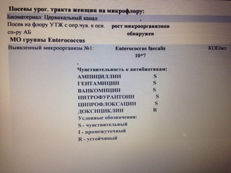 Энтерококк фекальный лечение у беременных женщин 1164