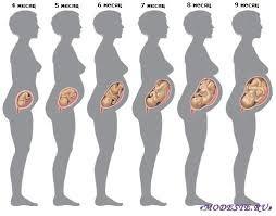 На каком сроке беременности появляется