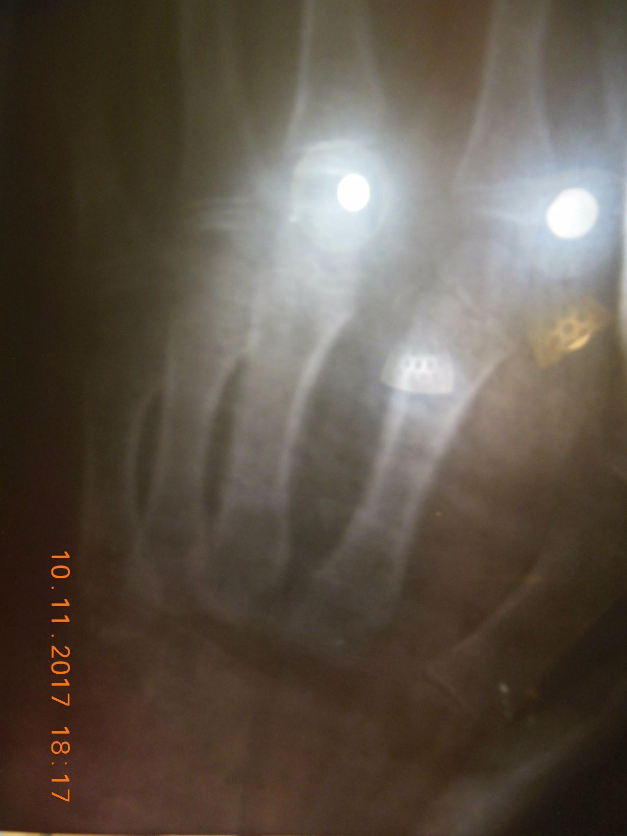 свое перелом хвоста со смещением фото керамической